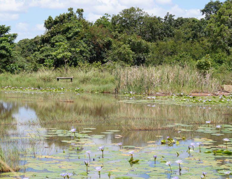 Das einzigartige Biosphärenreservat Lubombo in Eswatini