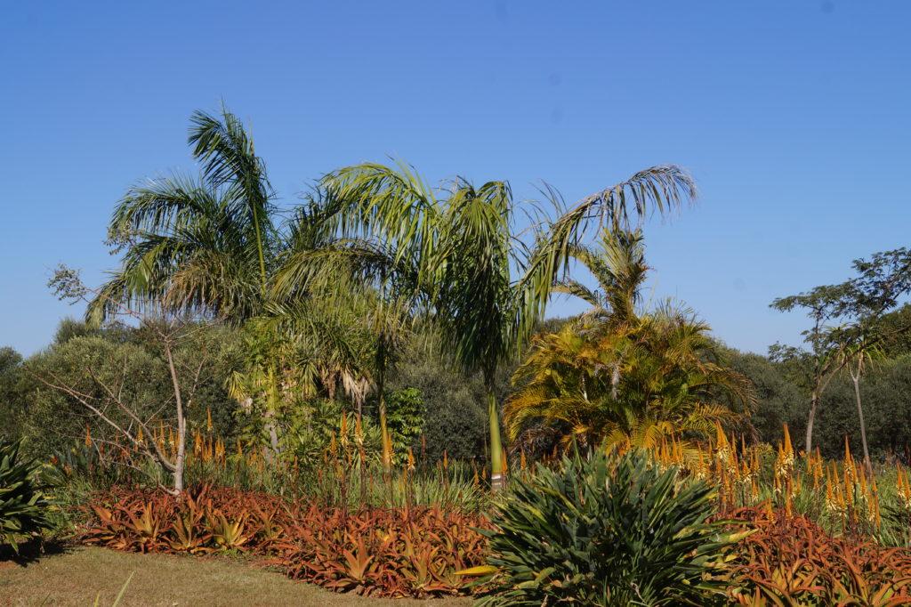 Palmen Gedenkgarten
