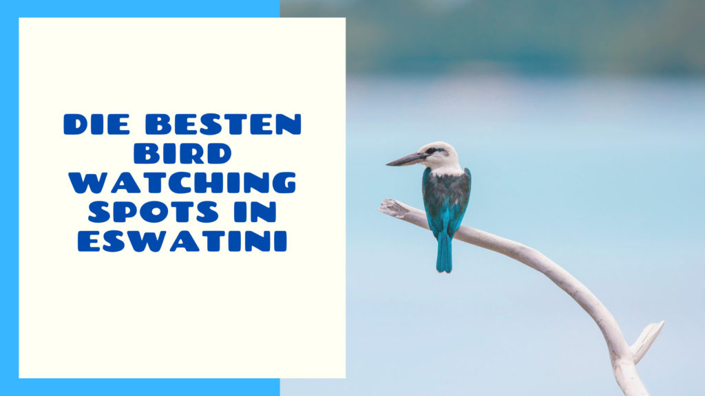 Die besten Bird Watching Spots in Eswatini